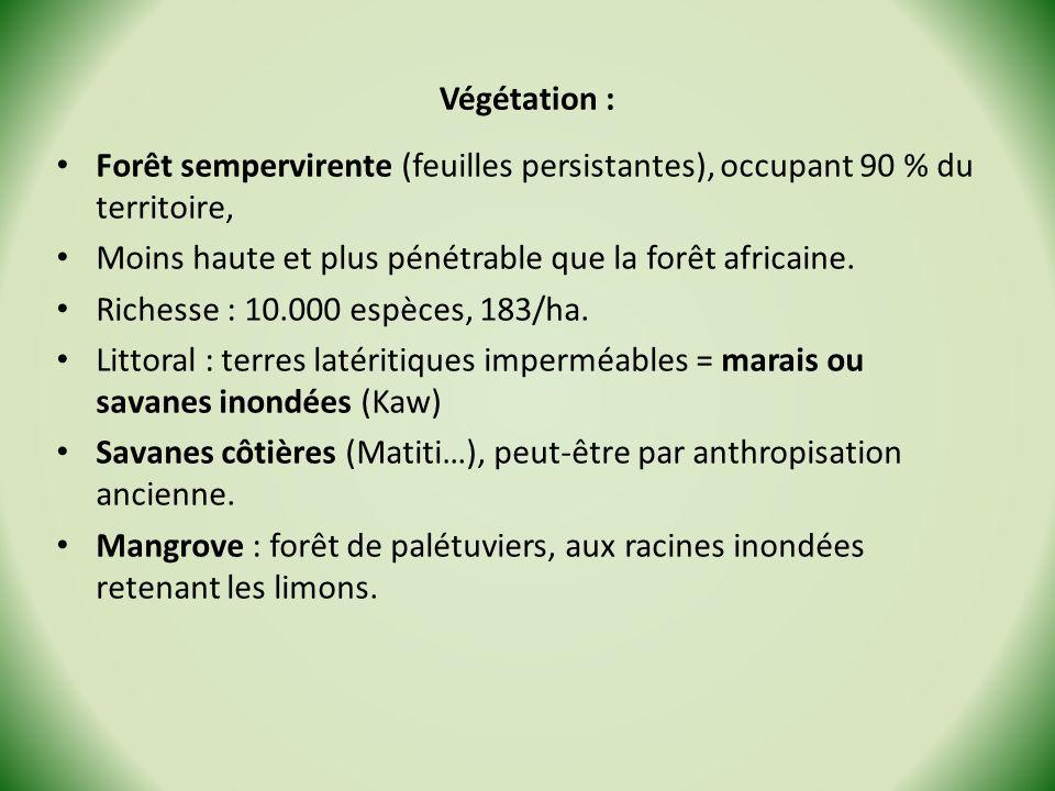 Végétation : Forêt sempervirente (feuilles persistantes), occupant 90 % du territoire, Moins haute et plus pénétrable que la forêt africaine.
