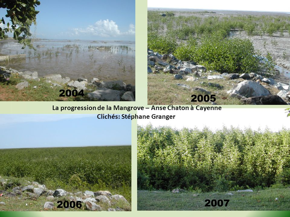 2004 2005 La progression de la Mangrove – Anse Chaton à Cayenne Clichés: Stéphane Granger 2006 2007