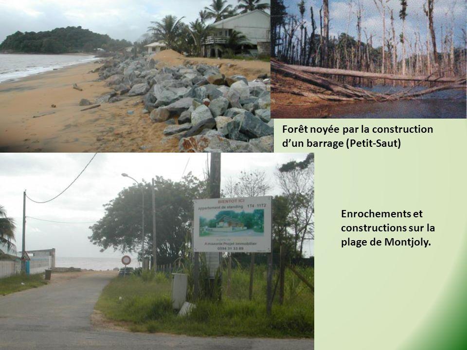 Forêt noyée par la construction