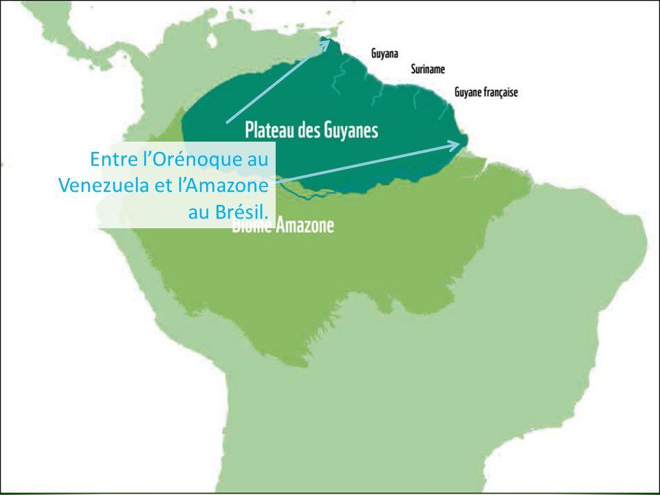 Entre l'Orénoque au Venezuela et l'Amazone au Brésil.