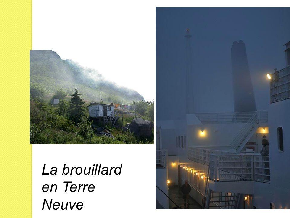 La brouillard en Terre Neuve