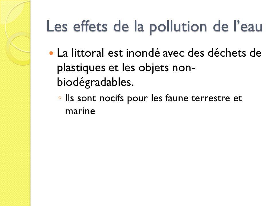 Les effets de la pollution de l'eau