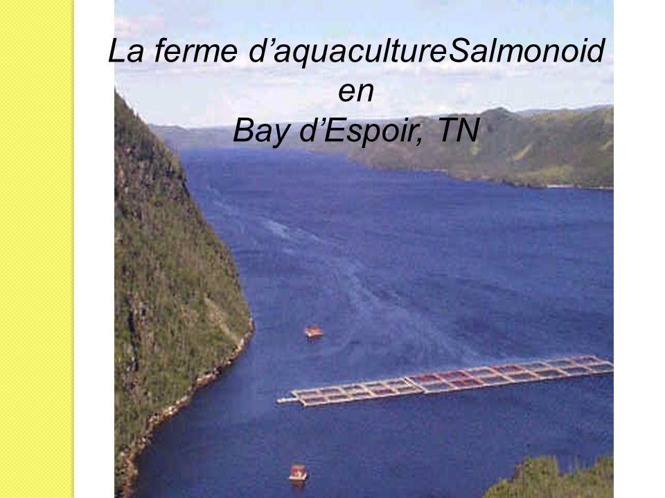 La ferme d'aquacultureSalmonoid en