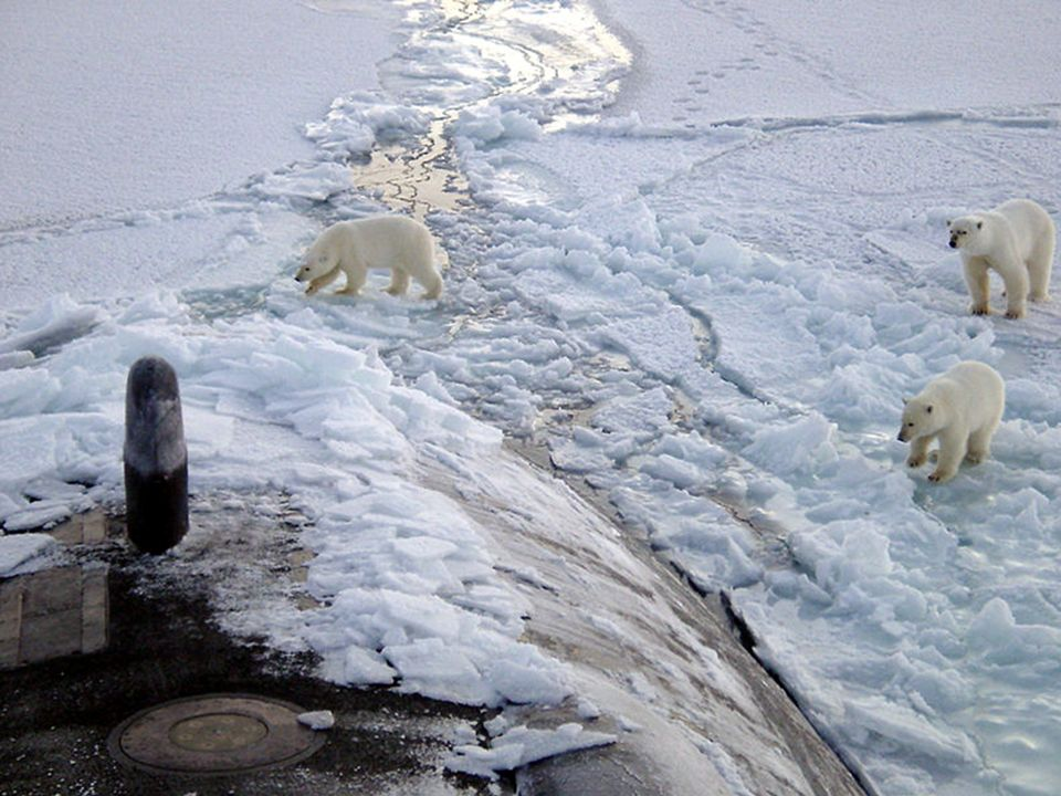 … et menacés ! http://www.robindesbois.org/arctic/polar_star_2_FR.html.