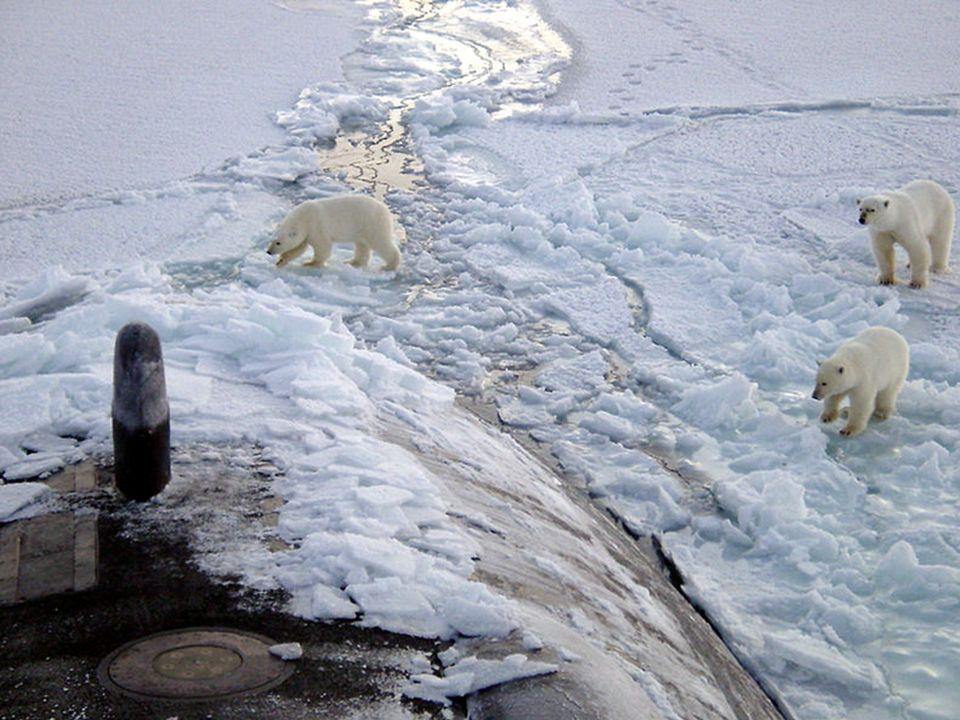 … et menacés !http://www.robindesbois.org/arctic/polar_star_2_FR.html.