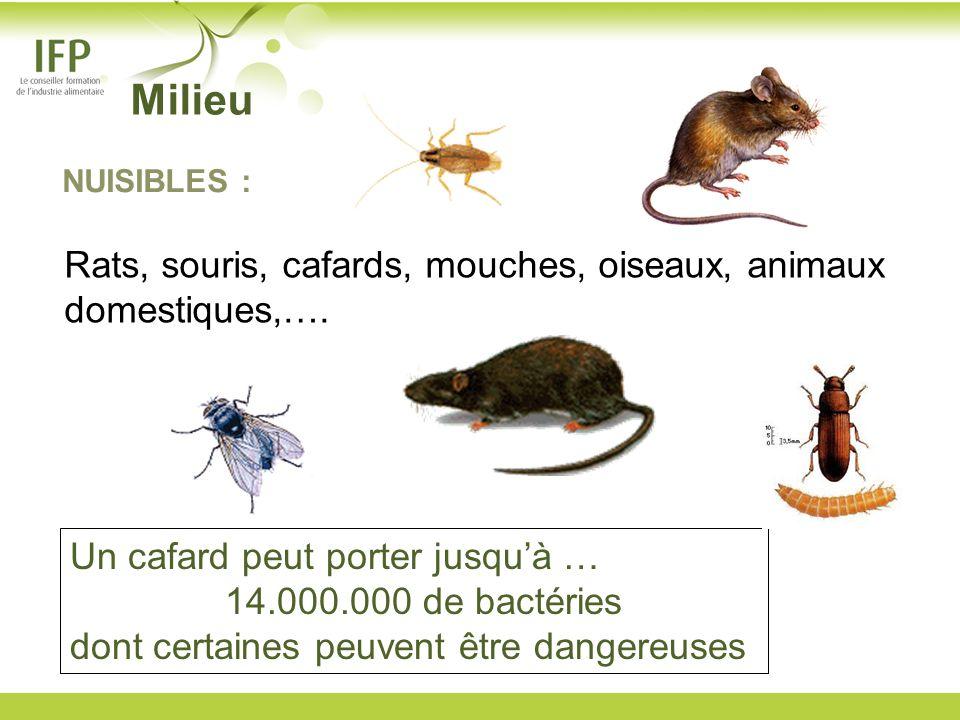 Milieu Rats, souris, cafards, mouches, oiseaux, animaux domestiques,….