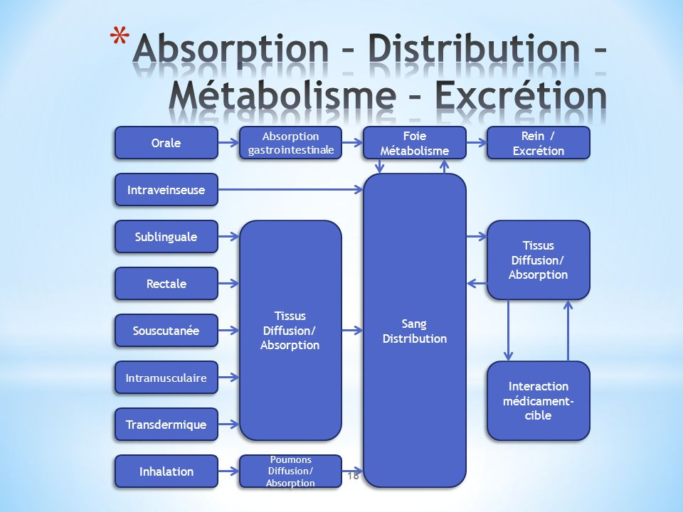Absorption – Distribution – Métabolisme – Excrétion