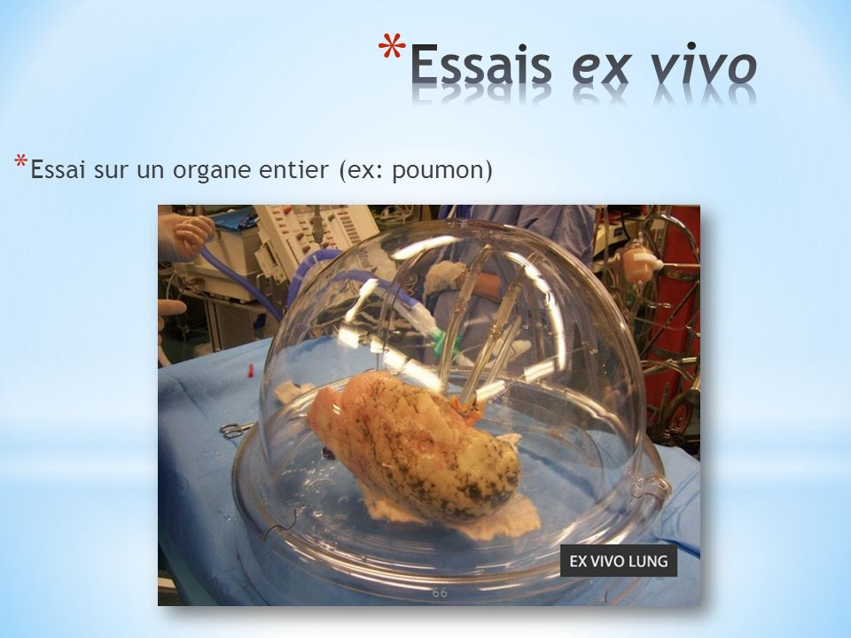 Essais ex vivo Essai sur un organe entier (ex: poumon)