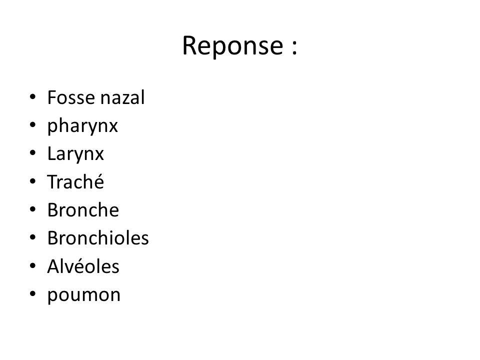 Reponse : Fosse nazal pharynx Larynx Traché Bronche Bronchioles