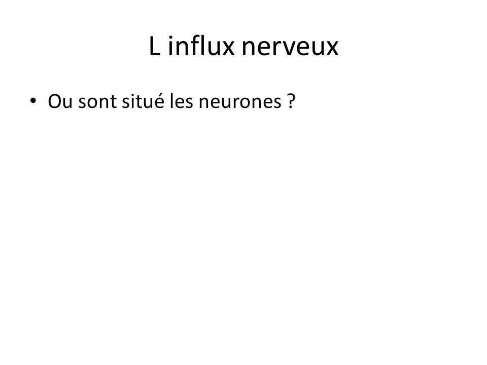 L influx nerveux Ou sont situé les neurones
