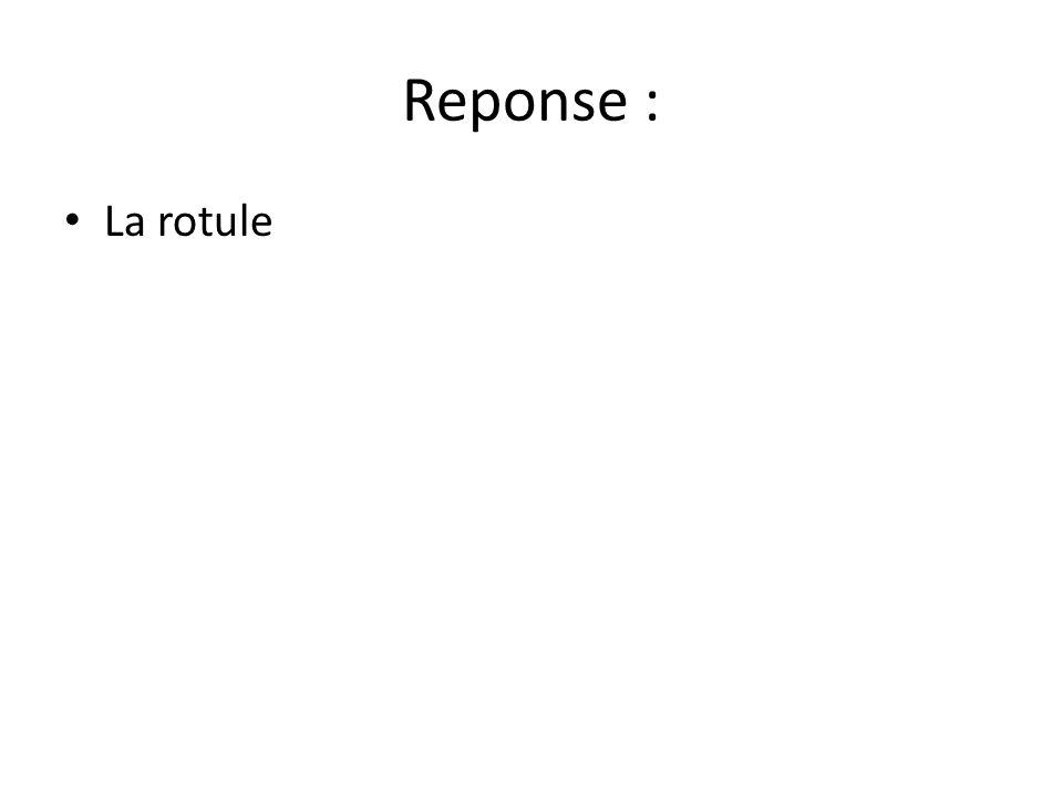 Reponse : La rotule