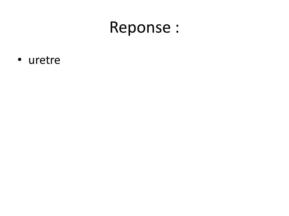 Reponse : uretre