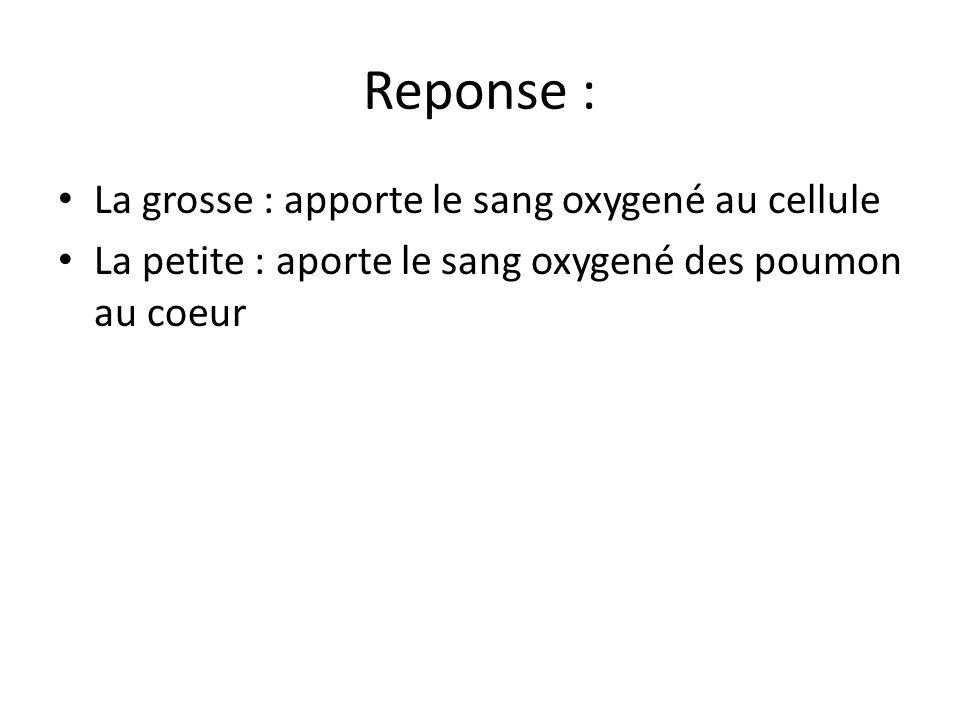 Reponse : La grosse : apporte le sang oxygené au cellule