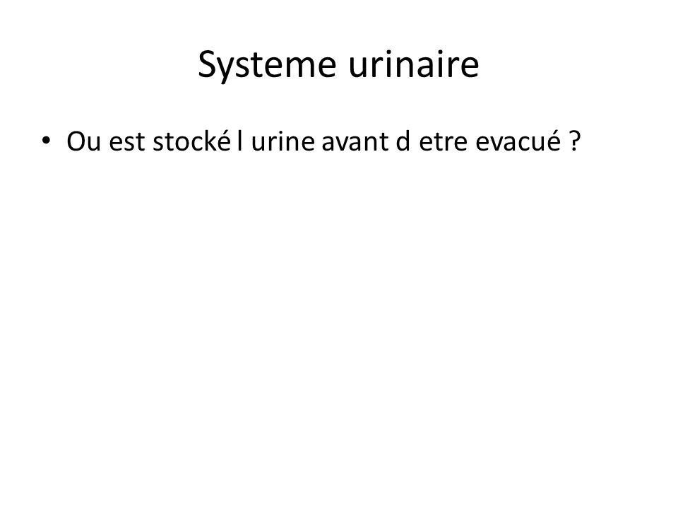 Systeme urinaire Ou est stocké l urine avant d etre evacué