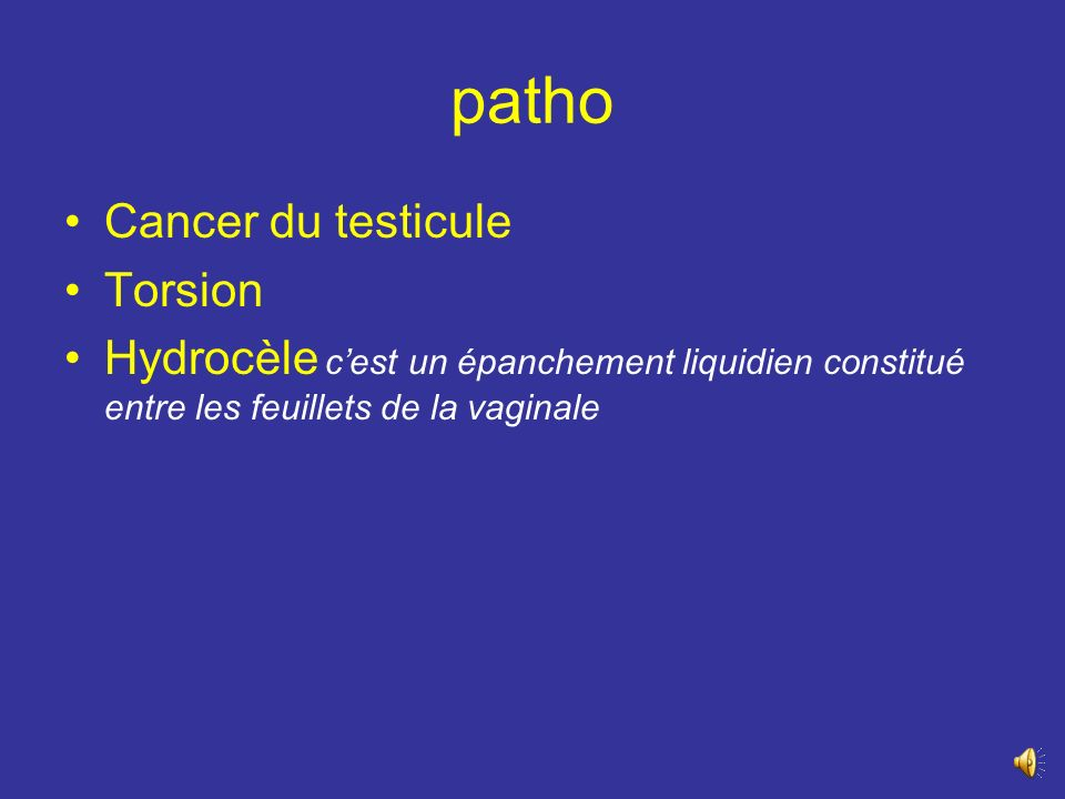 patho Cancer du testicule Torsion