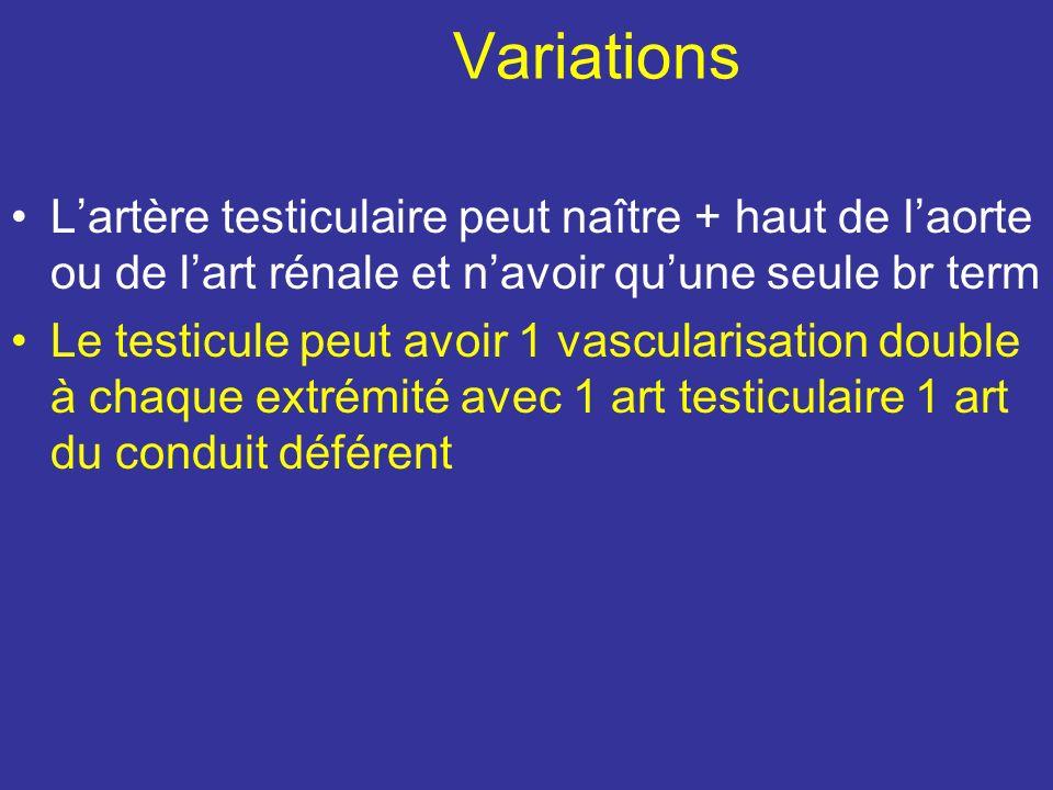 Variations L'artère testiculaire peut naître + haut de l'aorte ou de l'art rénale et n'avoir qu'une seule br term.