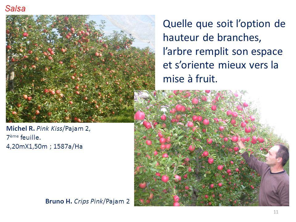Salsa Quelle que soit l'option de hauteur de branches, l'arbre remplit son espace et s'oriente mieux vers la mise à fruit.