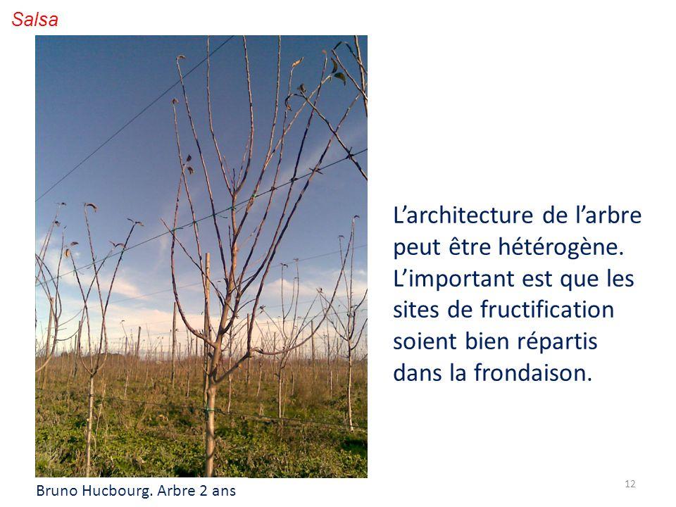 L'architecture de l'arbre peut être hétérogène.