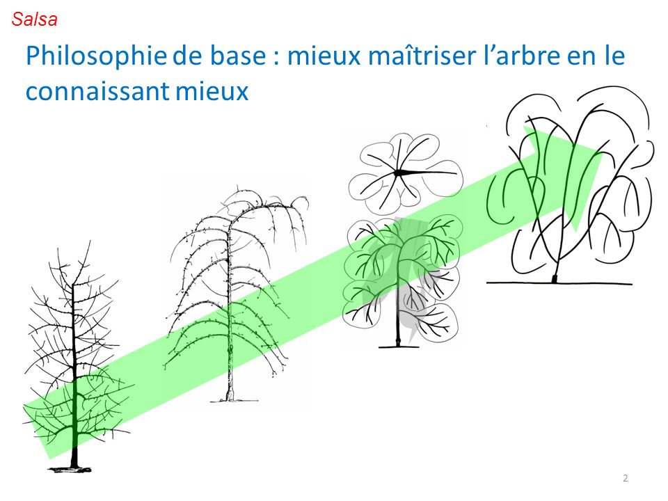 Philosophie de base : mieux maîtriser l'arbre en le connaissant mieux