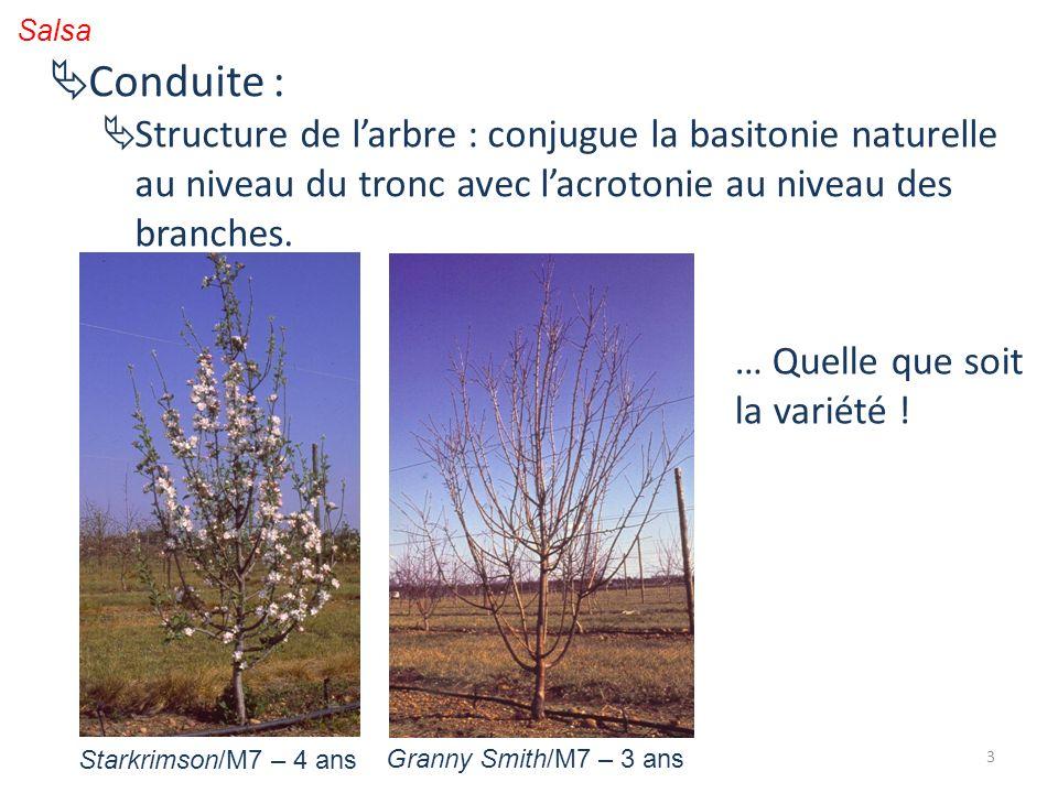 Salsa Conduite : Structure de l'arbre : conjugue la basitonie naturelle au niveau du tronc avec l'acrotonie au niveau des branches.