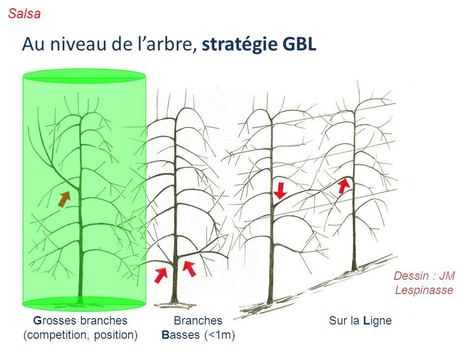 Au niveau de l'arbre, stratégie GBL
