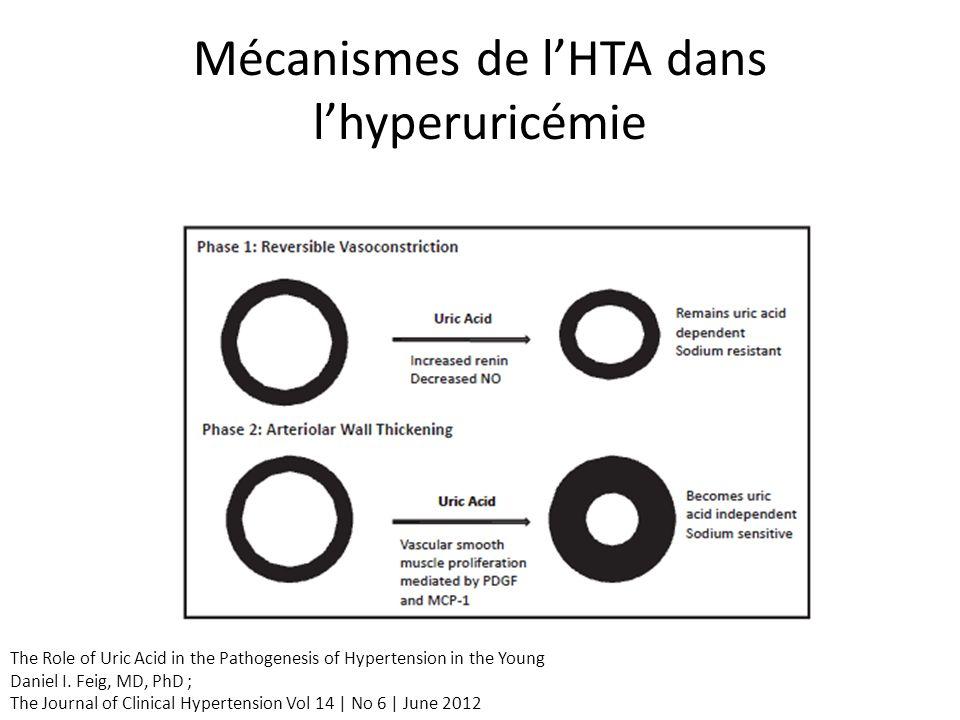 Mécanismes de l'HTA dans l'hyperuricémie