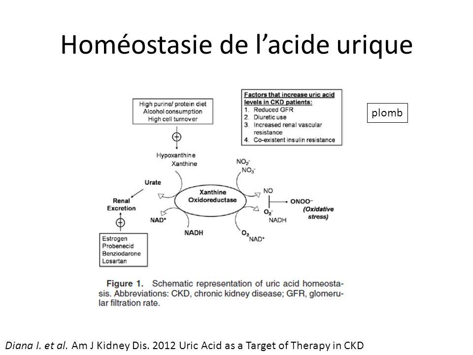 Homéostasie de l'acide urique