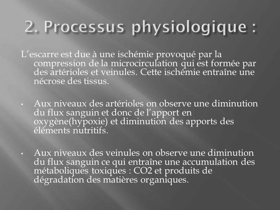 2. Processus physiologique :