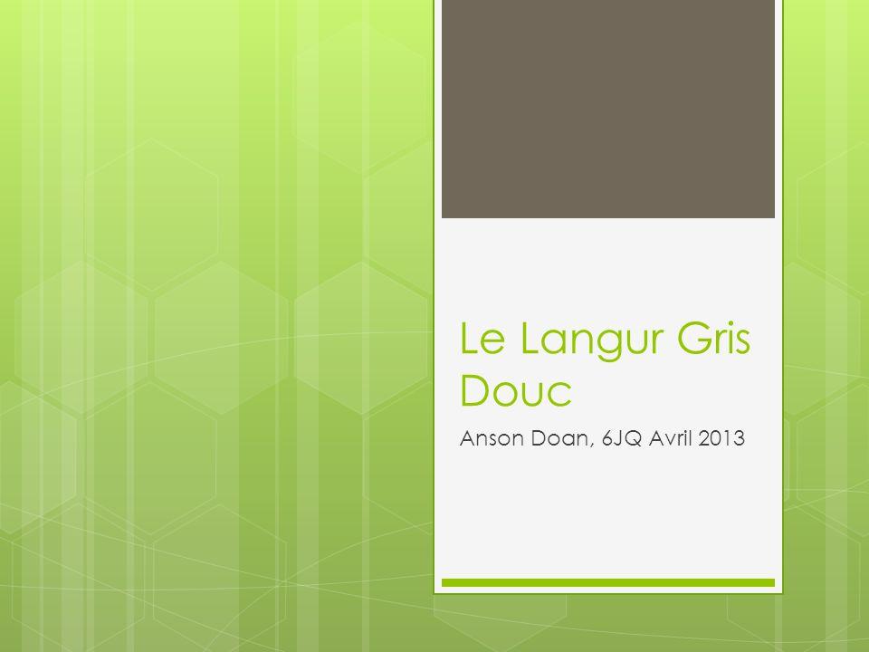 Le Langur Gris Douc Anson Doan, 6JQ Avril 2013