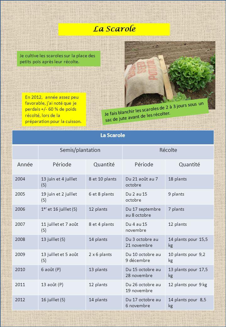 La Scarole La Scarole Semis/plantation Récolte Année Période Quantité