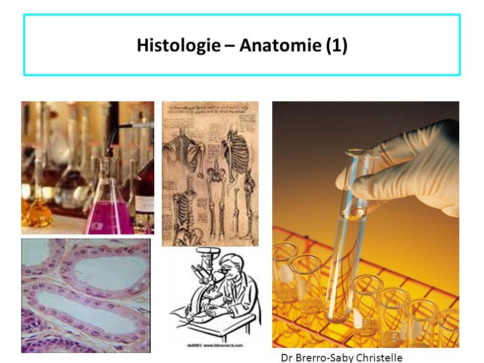 Histologie – Anatomie (1)