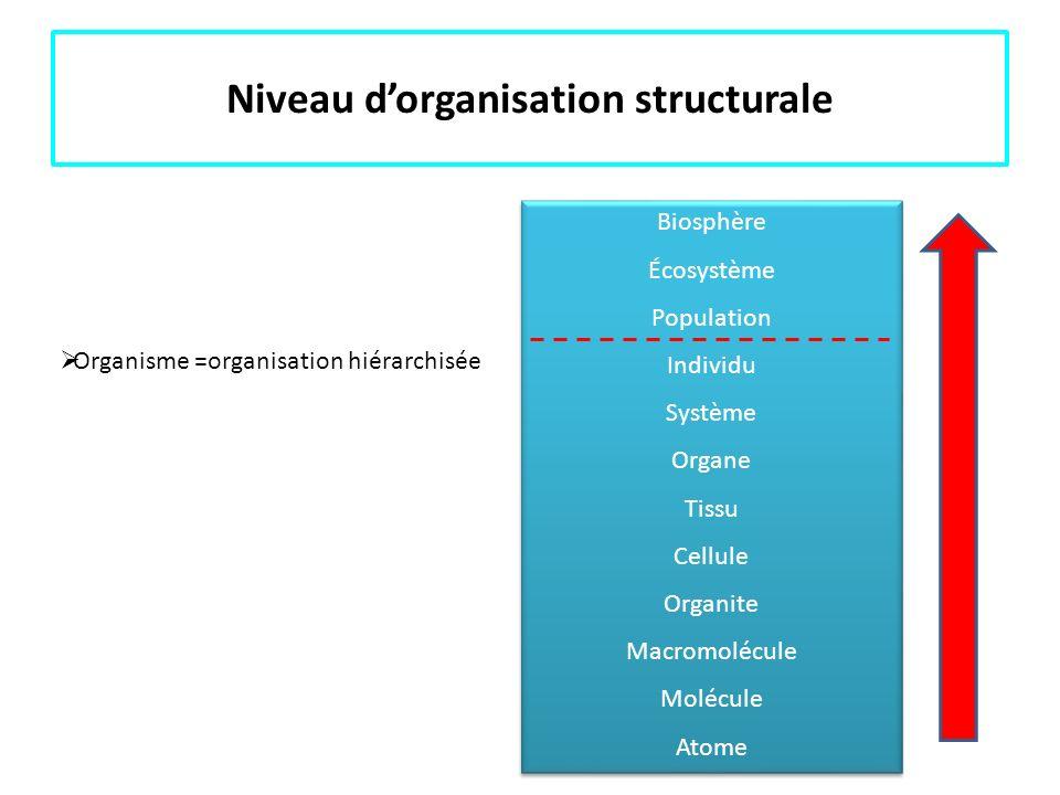 Niveau d'organisation structurale