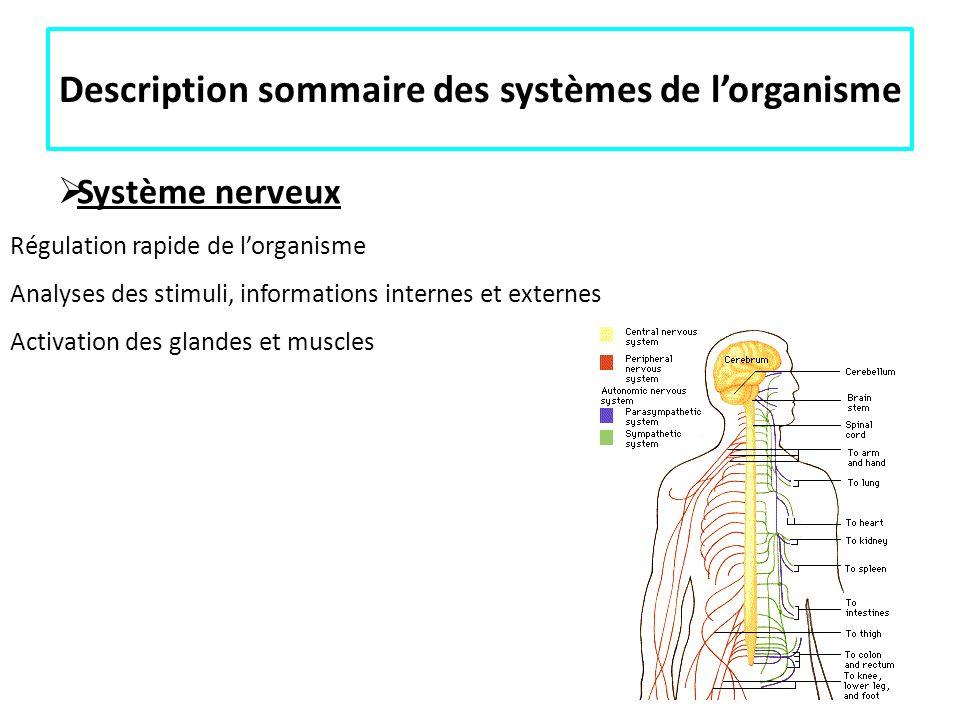 Description sommaire des systèmes de l'organisme