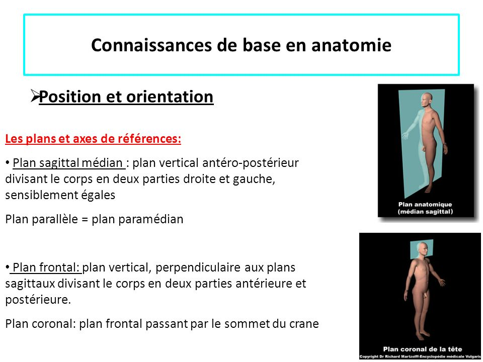 Connaissances de base en anatomie