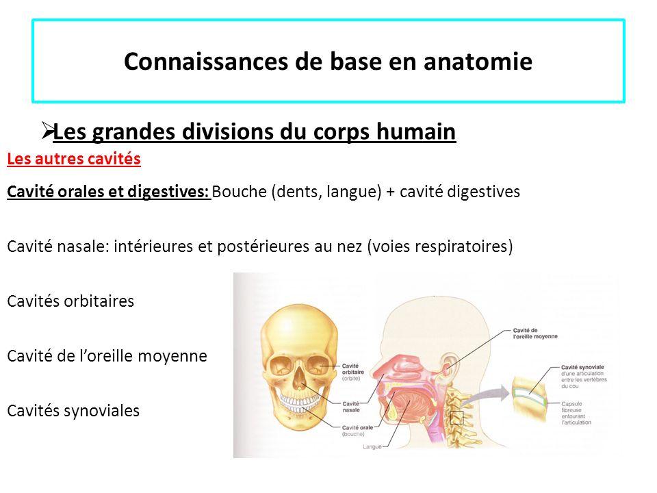 Tolle Orale Anatomie Ideen - Menschliche Anatomie Bilder ...