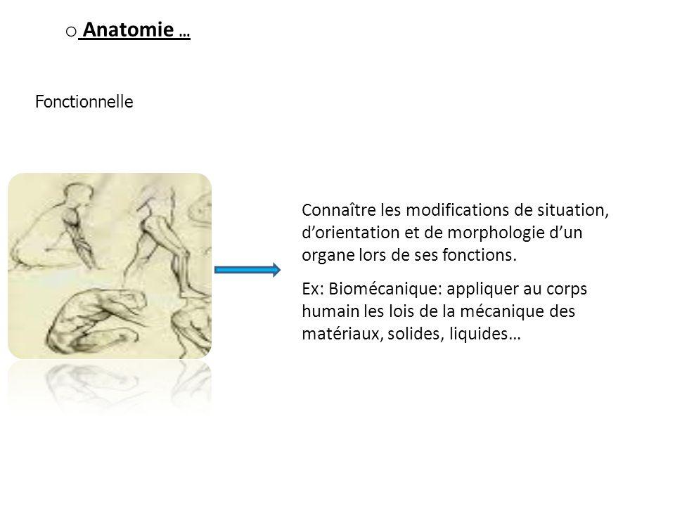 Anatomie … Fonctionnelle. Connaître les modifications de situation, d'orientation et de morphologie d'un organe lors de ses fonctions.
