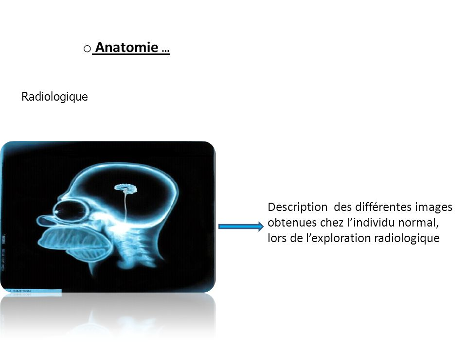 Anatomie … Radiologique.