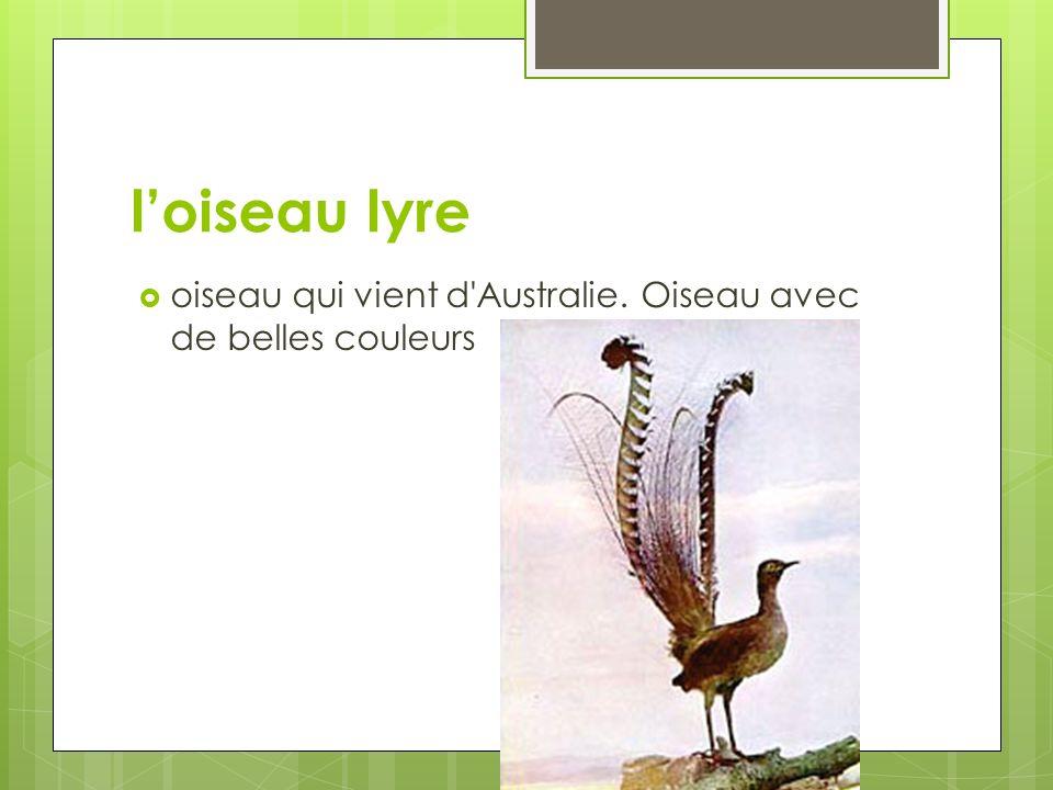 l'oiseau lyre oiseau qui vient d Australie. Oiseau avec de belles couleurs