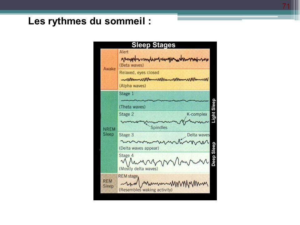 Les rythmes du sommeil :