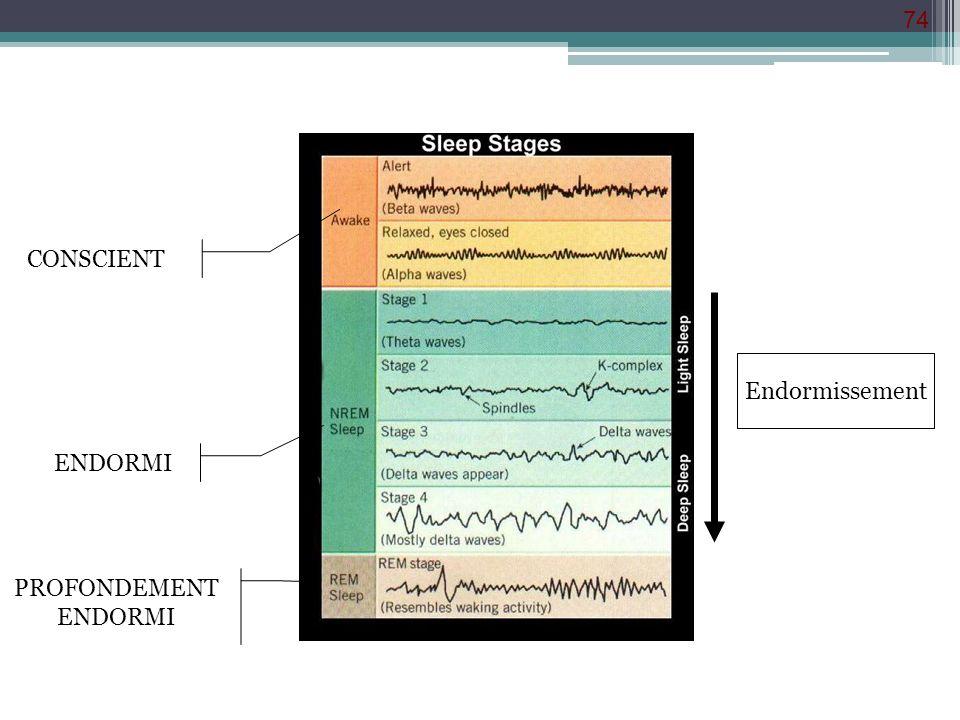 CONSCIENT Endormissement ENDORMI PROFONDEMENT ENDORMI
