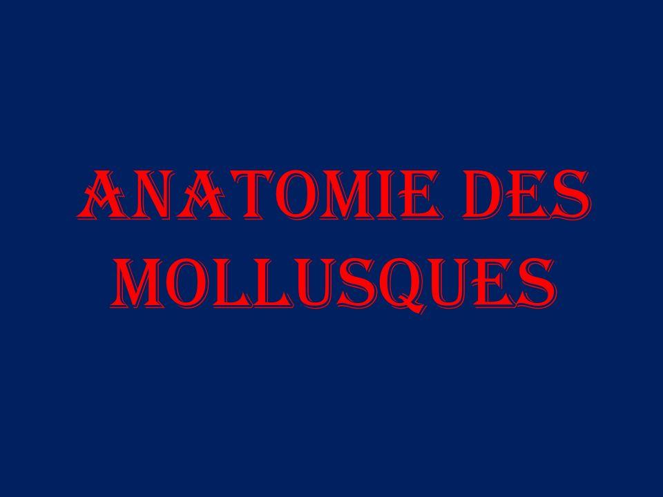 Anatomie des Mollusques