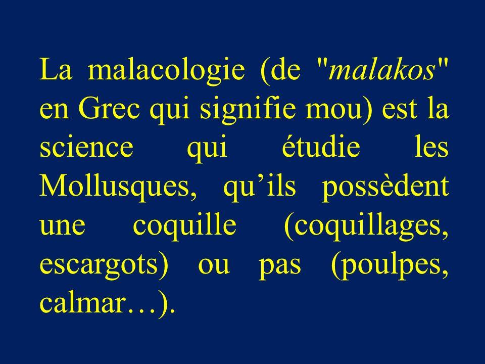 La malacologie (de malakos en Grec qui signifie mou) est la science qui étudie les Mollusques, qu'ils possèdent une coquille (coquillages, escargots) ou pas (poulpes, calmar…).