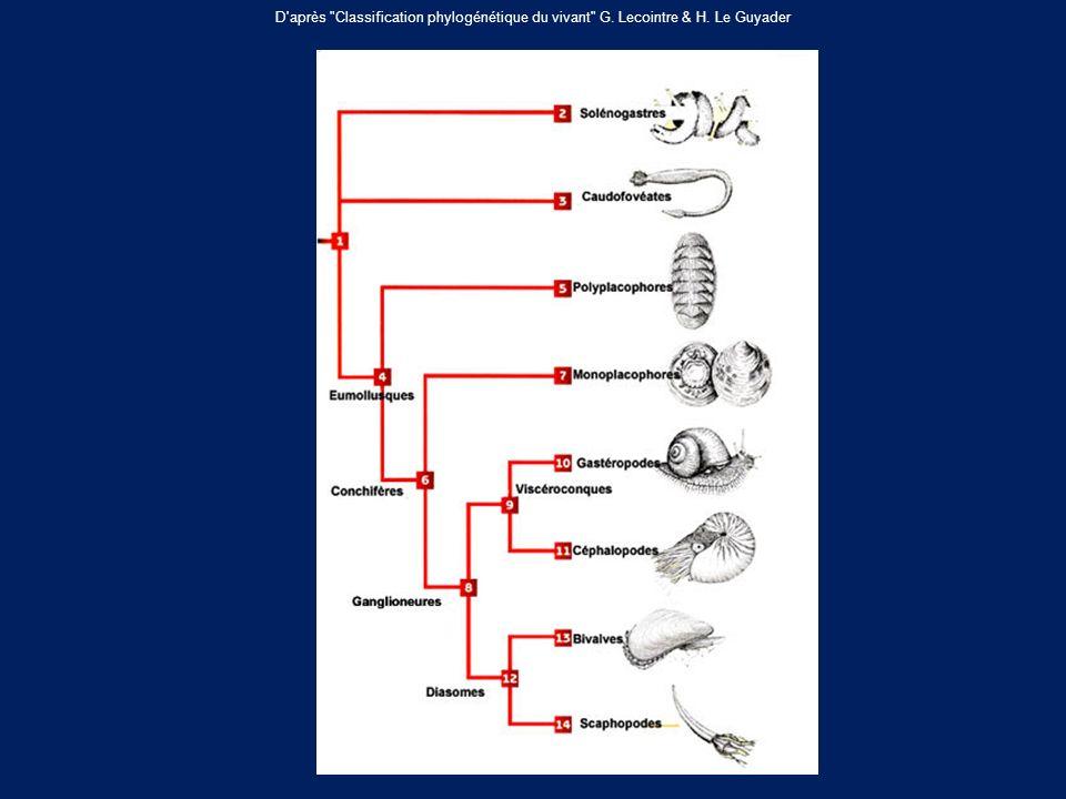D après Classification phylogénétique du vivant G. Lecointre & H