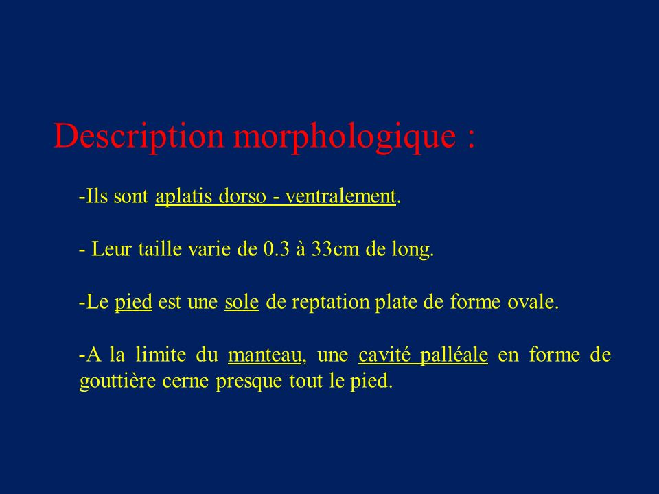 Description morphologique :