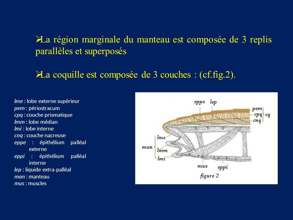 La coquille est composée de 3 couches : (cf.fig.2).