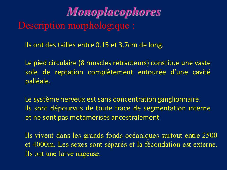 Monoplacophores Description morphologique :