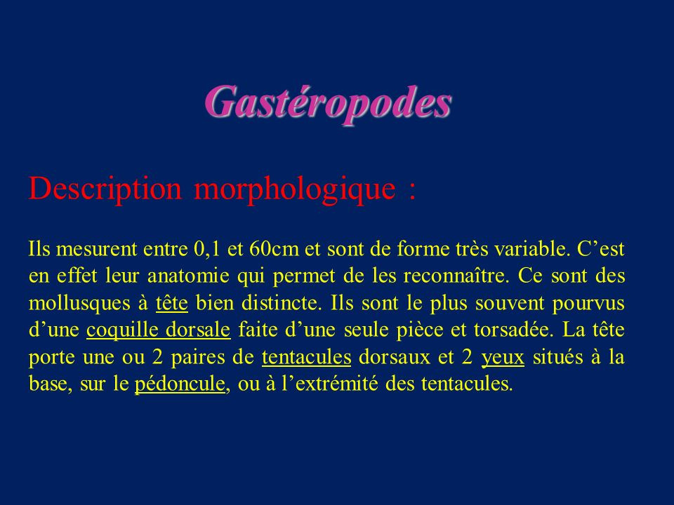 Gastéropodes Description morphologique :