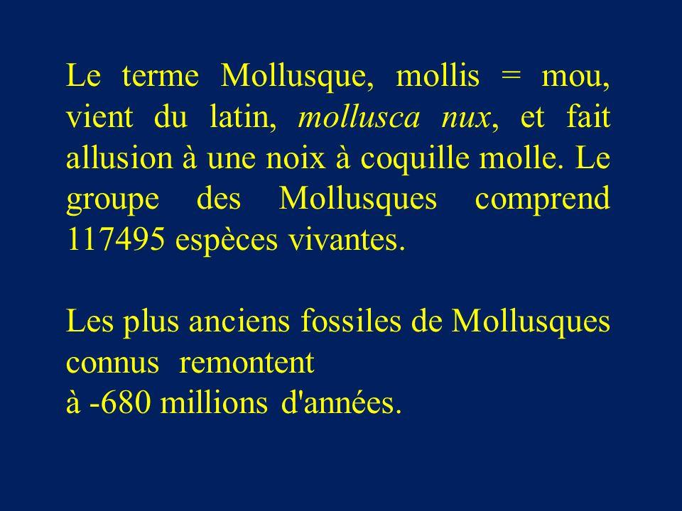 Le terme Mollusque, mollis = mou, vient du latin, mollusca nux, et fait allusion à une noix à coquille molle. Le groupe des Mollusques comprend 117495 espèces vivantes.
