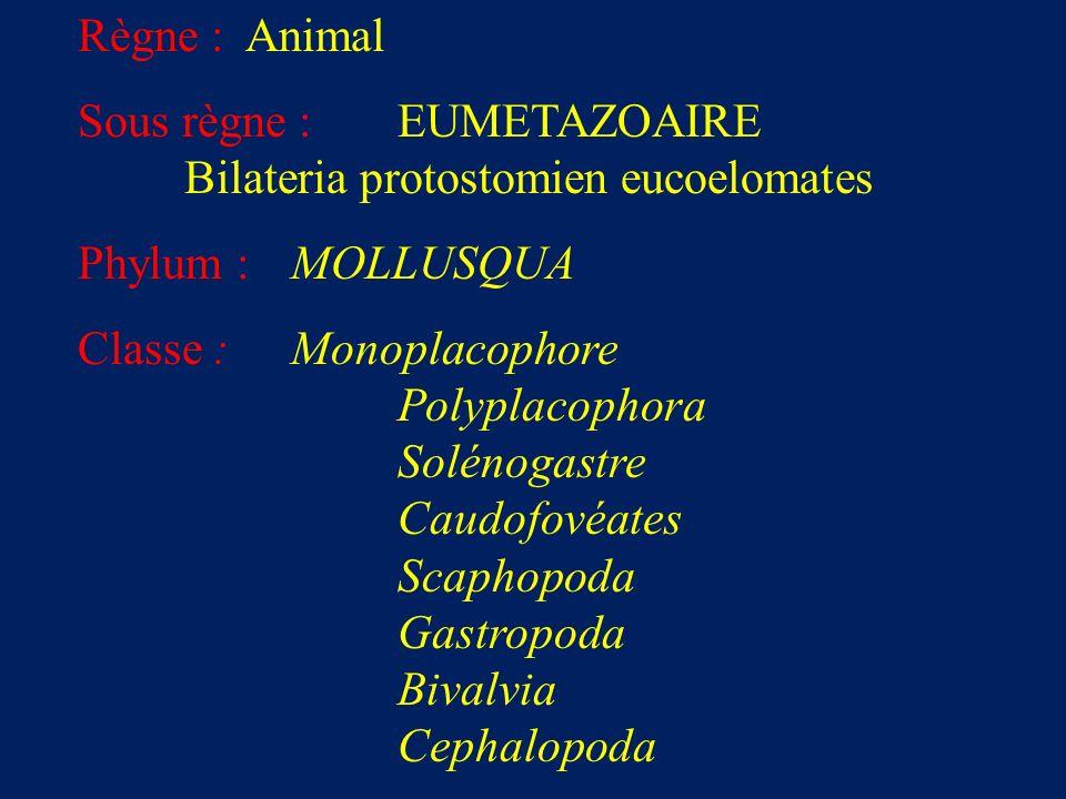 Règne : Animal Sous règne : EUMETAZOAIRE. Bilateria protostomien eucoelomates. Phylum : MOLLUSQUA.