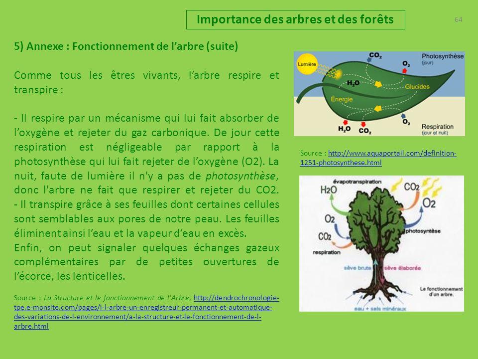 Importance des arbres et des forêts